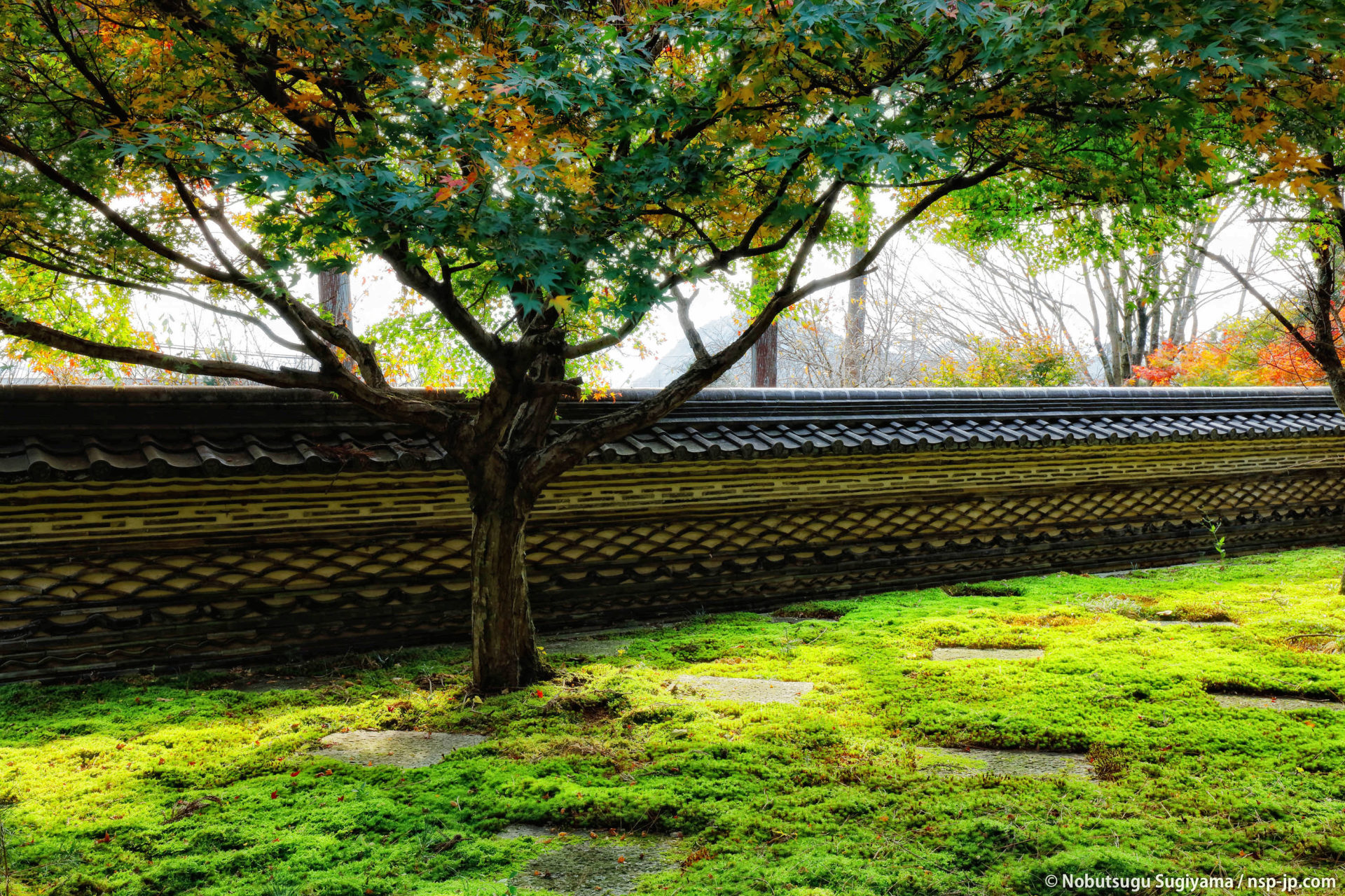 大智寺-瓦土塀と無相の庭 | 岐阜 故郷巡礼 by 杉山宣嗣