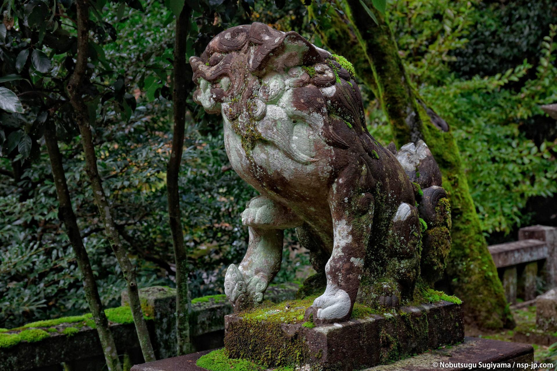 伊奈波神社-桜門前の狛犬 | 岐阜 故郷巡礼 by 杉山宣嗣